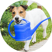 Small dog carrying a watering can