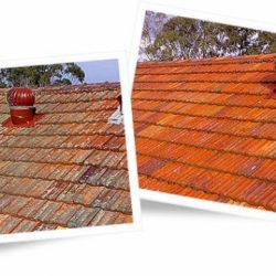 Roof tiles before and after cleaning with Wet & Forget
