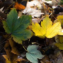Cleaning Your Garden in Autumn