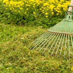 How to clean up your garden on a budget